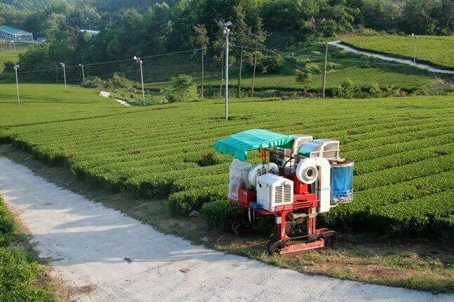 "Machine tea ""picking"""