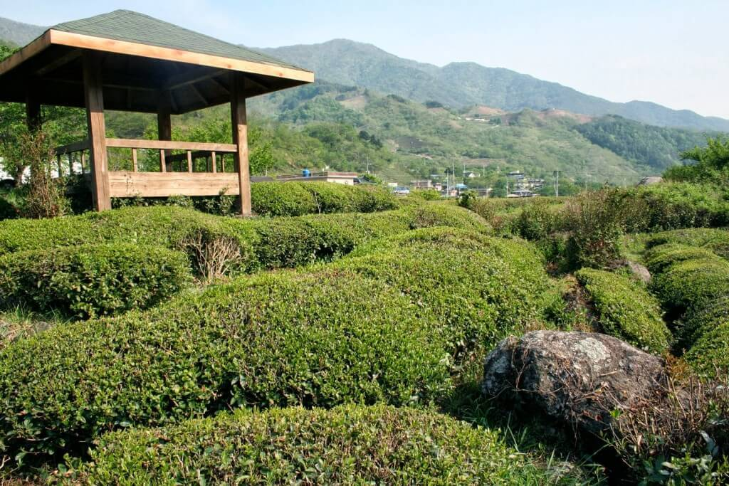 Dong Cheon farm
